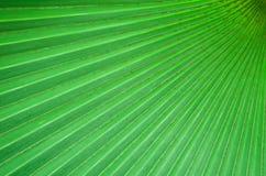 Salto verde diagonale del plam. Immagini Stock