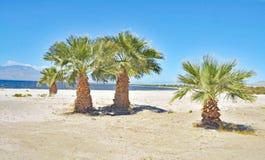 Salton hav: ökenoas Royaltyfri Foto