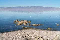 Salton Sea Stock Photo