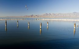 Salton Sea California. Salt covered pilings in the Salton Sea, Southern California stock images