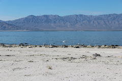 Salton Sea Landscape California Royalty Free Stock Image