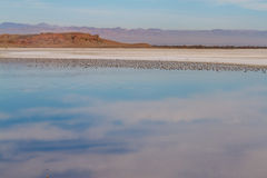 Salton Sea Landscape Stock Image