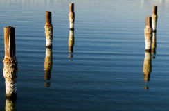 Salton Sea Pilings. Salt covered pilings in the Salton Sea, Southern California Royalty Free Stock Photos