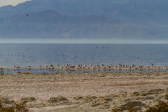 Salton Sea Royalty Free Stock Photos