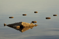 Salton Sea Stumps Royalty Free Stock Image