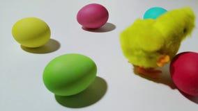 Saltos mecánicos del polluelo de la conclusión entre los huevos de Pascua 2