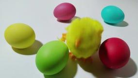 Saltos mecánicos del polluelo de la conclusión entre los huevos de Pascua