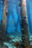 Saltpier Bonaire Imagem de Stock Royalty Free