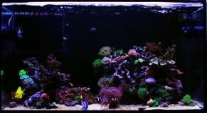 Saltvattens- beh?llare f?r akvarium f?r korallrev arkivfoton