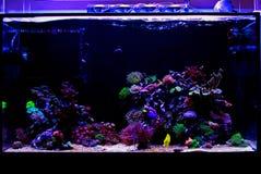 Saltvattens- beh?llare f?r akvarium f?r korallrev royaltyfri foto