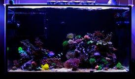 Saltvattens- beh?llare f?r akvarium f?r korallrev royaltyfria foton