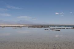 Saltvattens- lagun, Chile Arkivfoton