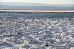 Saltvattens- lagun, Chile Arkivbilder