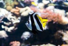 Saltvattensfisk Royaltyfria Foton