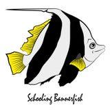 Saltwater εκπαίδευσης Bannerfish διάνυσμα ψαριών ενυδρείων Στοκ Εικόνες