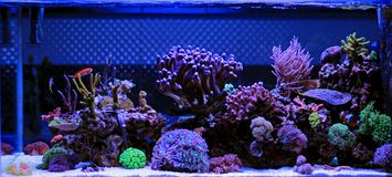 Saltwater ενυδρείο, σκηνή δεξαμενών κοραλλιογενών υφάλων στο σπίτι στοκ εικόνες