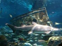 saltwater νερού ενυδρείων ψαριών εξωτικός καρχαρίας koi στοκ εικόνες
