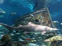 saltwater νερού ενυδρείων ψαριών εξωτικός καρχαρίας koi στοκ εικόνες με δικαίωμα ελεύθερης χρήσης
