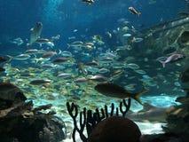 saltwater νερού ενυδρείων ψαριών εξωτικό koi στοκ εικόνες