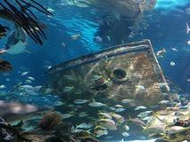 saltwater νερού ενυδρείων ψαριών εξωτικό koi στοκ φωτογραφία