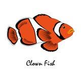 Saltwater ψαριών κλόουν απεικόνιση ψαριών ενυδρείων Στοκ Εικόνες