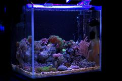 Saltwater akwarium, rafy koralowa cysternowa scena w domu zdjęcia stock