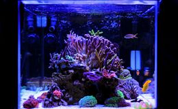 Saltwater aquarium, Coral reef tank scene at home. One of the most unique hooby in the world Stock Images