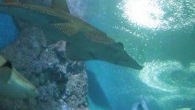 Saltwater aquarium fish. Group of sea-fish in saltwater aquarium stock video