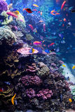 Saltwater Aquarium with Tropical Fish Stock Images