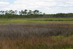 Saltwater bagno przy Łysym punktu stanu parkiem Floryda Zdjęcia Stock