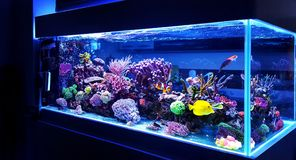 Saltwater coral reef aquarium fish tank is one of the most beautiful hobby. Saltwater coral reef aquarium fish tank at home is one of the most beautiful and stock image