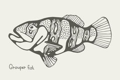 Saltwater fish grouper.  illustration picture Royalty Free Stock Photo