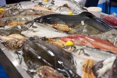 Saltwater fish on market display Royalty Free Stock Image