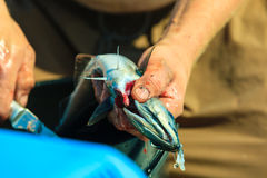 Saltwater fishing - man cleaning fish outdoor Stock Images