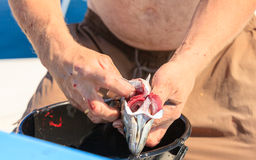 Saltwater fishing - man cleaning fish outdoor Stock Photography