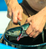 Saltwater fishing - man cleaning fish outdoor Stock Image