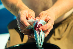 Saltwater fishing - man cleaning fish outdoor Royalty Free Stock Photography
