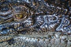 Saltwater krokodyl, zamyka up oko i zęby Bali zoo Indonezja zdjęcia stock