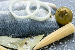 Saltwater marinated fish, cold appetizer. Royalty Free Stock Photo