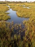 Saltwater Marshland Royalty Free Stock Images