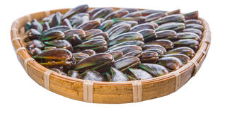 Saltwater Mussel In Wicker Tray V Stock Image