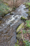 Saltwater Park Stream 2. A stream rushes toward the Puget Sound at Saltwater State Park in Washington State royalty free stock images