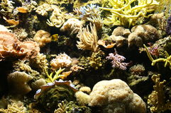Saltwater reef. Underwater shot of a saltwater reef with assorted fish swimming around royalty free stock image