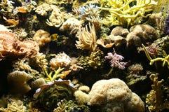 Saltwater reef Royalty Free Stock Image