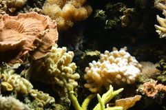 Saltwater reef. Underwater shot of a saltwater reef with assorted fish swimming around royalty free stock photography