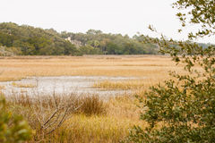 Saltwater Wetland Marsh in Drought Royalty Free Stock Photo