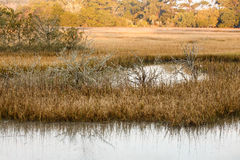 Saltwater Wetland Marsh. Early Morning Light on a Wetland Marsh Royalty Free Stock Photography