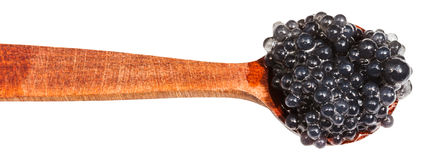 Salty black dyed caviare of halibut in wood spoon Stock Image