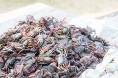 Salty crab, field crab pickled in fish sauce. special sauce of Thailand. Stock Photos