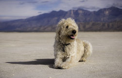 Salty Dog Royalty Free Stock Photo